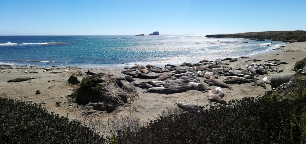 Highway 1 - sea lions