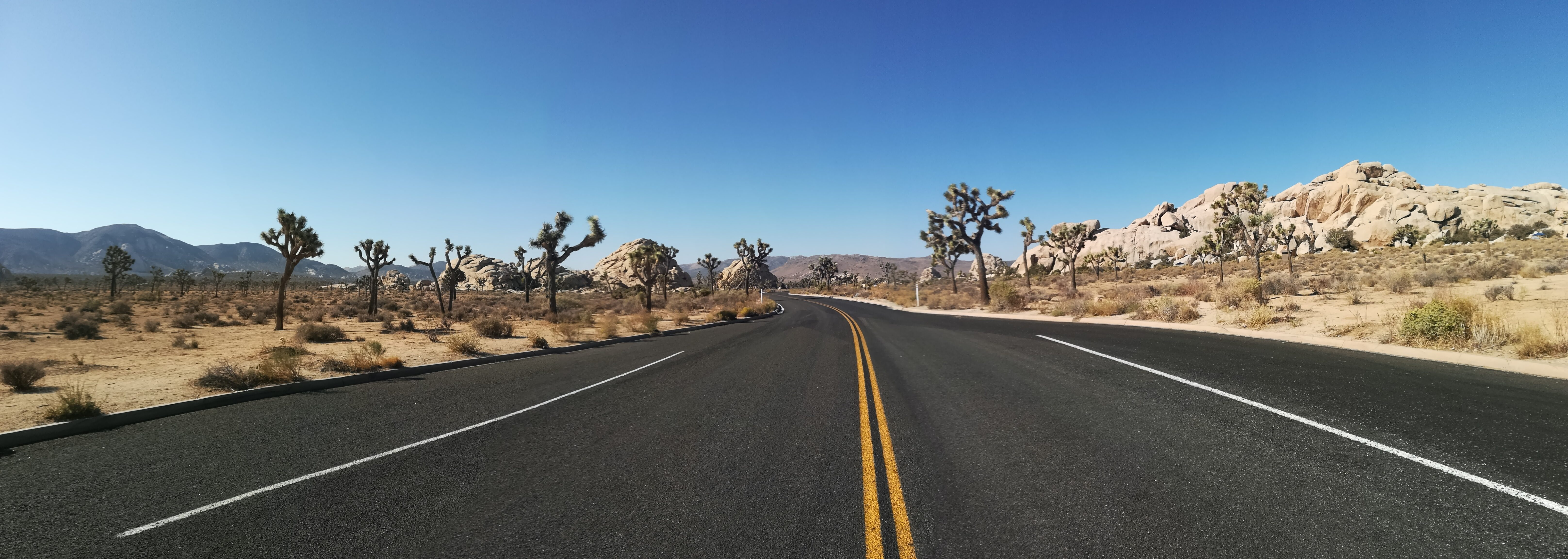 visiter joshua tree - road - tree